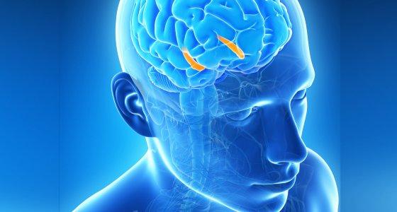 Eine extreme Deprivation in den ersten Lebensmonaten scheint besonders schädlich für die Entwicklung des Gehirns zu sein. /Sebastian Kaulitzki, stock.adobe.com
