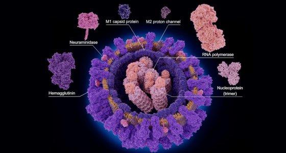 Influenzavirus /Juan Gärtner, stock.adobe.com