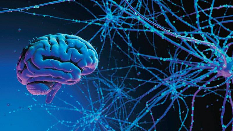 Die Datenbank informiert darüber, wo sich die Proteine innerhalb der Synapsen befinden und welche Funktion sie haben. Foto: sipgus/stock.adobe.com