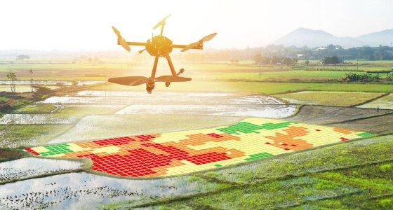 Drohne über Reisfeld /zapp2photo stock.adobe.com