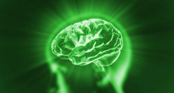 grünes Gehirn/stock.adobe.com, RealCG