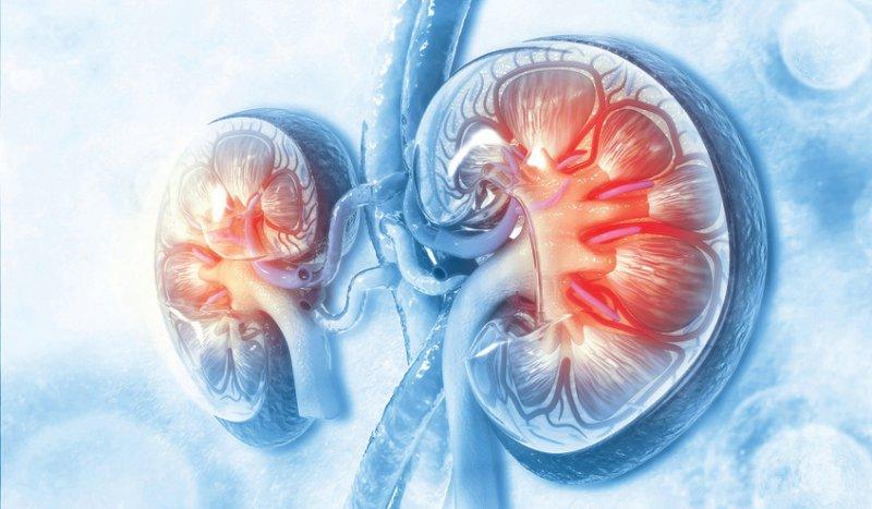 Bei vielen Patienten mit chronischer Nierenerkrankung handelt es sich um eine leichtgradige Form, die in der Regel keiner intensiven Therapie bedarf. Foto: Crystal light/stock.adobe.com
