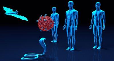 Pan-Coronaimpfstoff könnte auch Coronaviren aus der Tierwelt stoppen