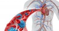 SARS-CoV-2 infiziert Herzzellen und verändert ihre Genaktivität