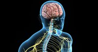 Studie: Neuroaxonale Schäden durch COVID-19 auch bei leichteren Verläufen