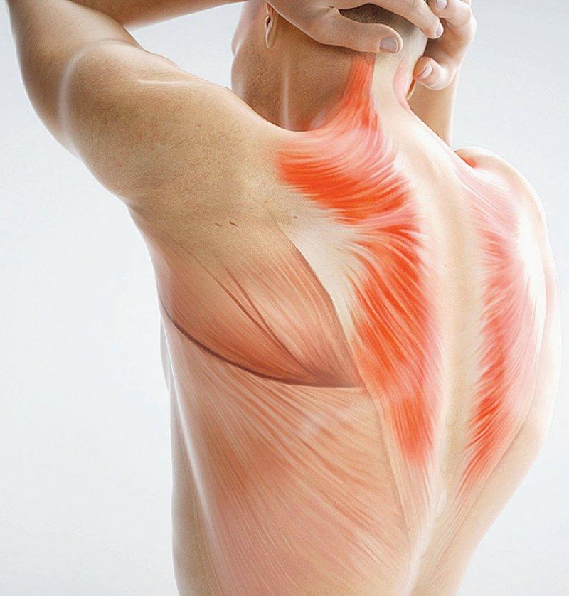 Myalgien können bei zeitgleicher Einnahme von Statinen durch Medikamente und Grapefruitzubereitungen verursacht werden. Foto: crevis/stock.adobe.com