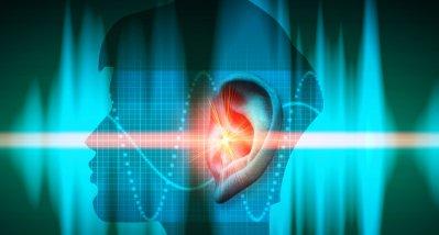 Gliazellen entscheidend für die zeitliche Verarbeitung akustischer Signale im Gehirn