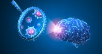Wie SARS-CoV-2 das Gehirn infiziert