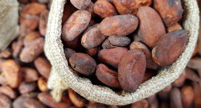 Echter Kakao verbessert Hirndurchblutung und kognitive Leistungen in Studie