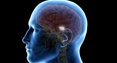 Gefühle für Hunger und Einsamkeit aktivieren gleiche Region im Gehirn