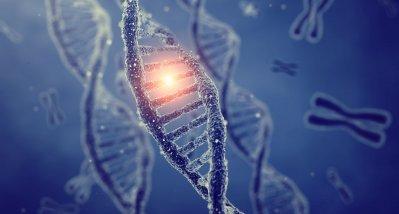 CLCN6 als Krankheitsgen für lysosomal bedingte neurodegenerative Krankheit identifiziert