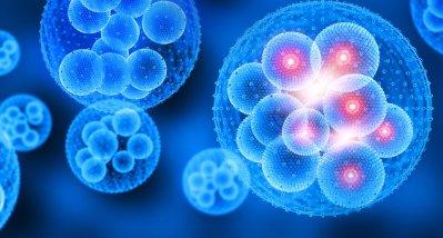 Neue Mikroskopiertechnik zeigt Prozesse an Zellmembranen